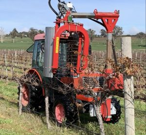 Machine pruning the Cabernet Sauvignon vines